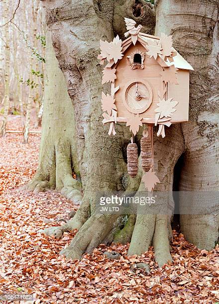 Cuckoo clock on tree in forest