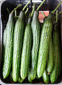 Fresh Cucumber background close up