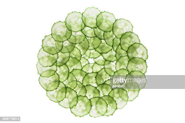 Cucumber Slices Circle Loop on White Background
