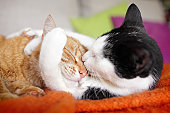 cuddly cat couple kissing