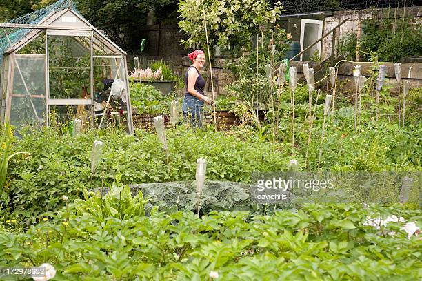 Cultivated allotment