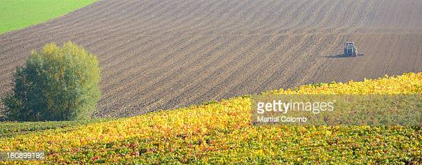 cultivated fields in CHAMPAGNE area