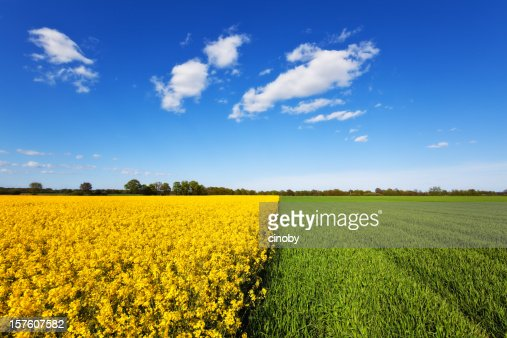 Cultivated Land : Stock Photo