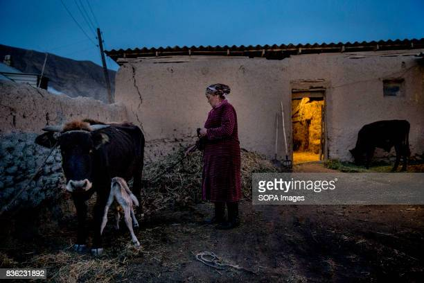 Cumagul Tolukbaeva milks her family's cow each morning and gathers water before going to her job as an elementary school principal The locals are...