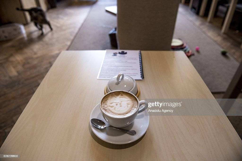 A cup of coffee, a cat shaped foam design on it, is seen on a table at the Cat Caffee is seen at Krowoderska 48,the Cat Coffee Krakow, Poland on May 4, 2016. The Cat Coffee is an attraction for the cat lovers and it is open since the end of June 2015 and has six cats. Two of the cats came from the ' Kocia Academia' fondation and the other four cats were or found on the street.