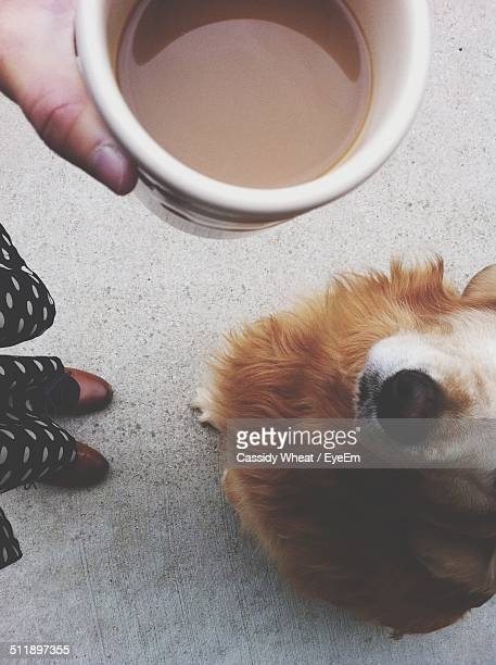 Cup of coffee held over dog