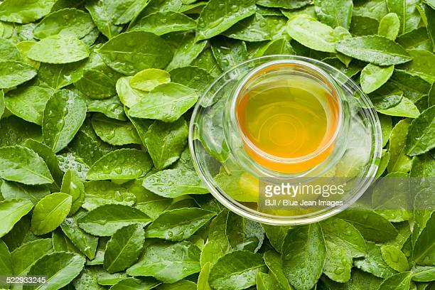 A cup of tea on green leaves