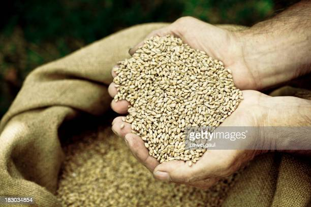 Contenant mains tenant des céréales