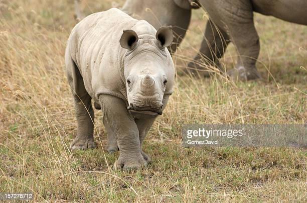 Curioso niño Wild blanco Rhino