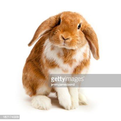 好奇心の強い Bunny