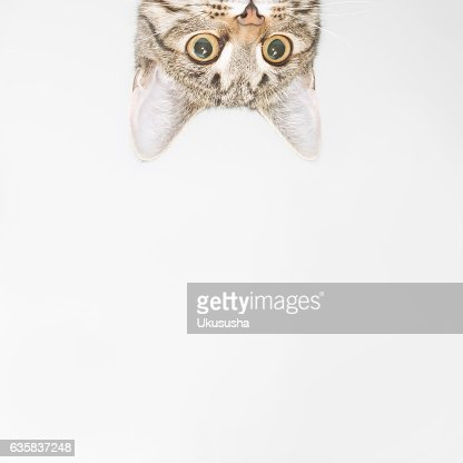Curious cat face looking out over the edge : Foto de stock