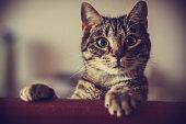 Curious cat looking at camera