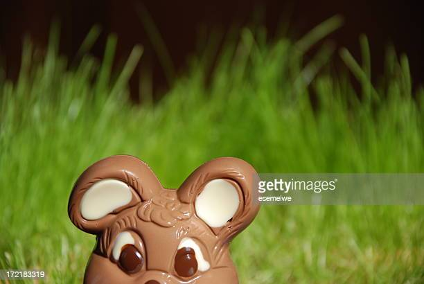 curious chocolate Easter bunny
