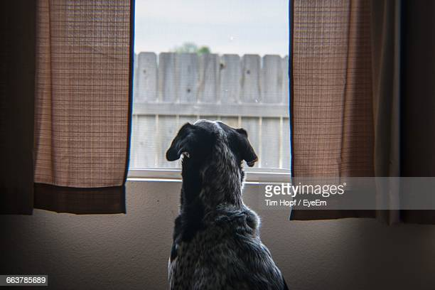 Curious Dog Looking Outside From Window