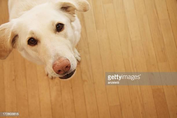 Curioso di cane
