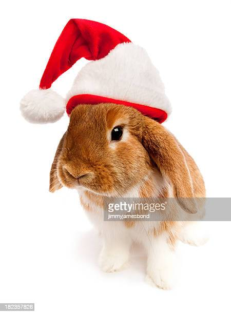 Curious Holiday Lop Rabbit