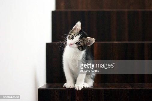Curious kitten in wooden stairs : Stock Photo