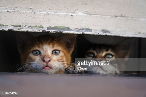 Curious Little Kittens are Hiding At The Pavement : Foto de stock