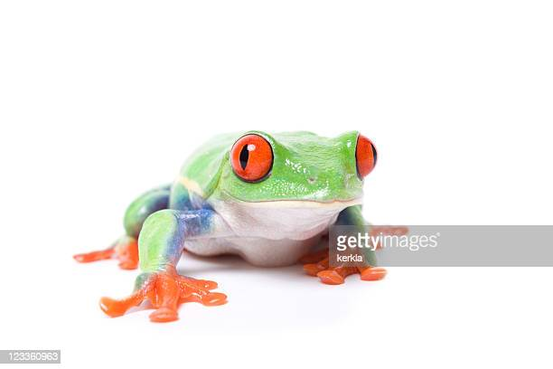 curious looking frog