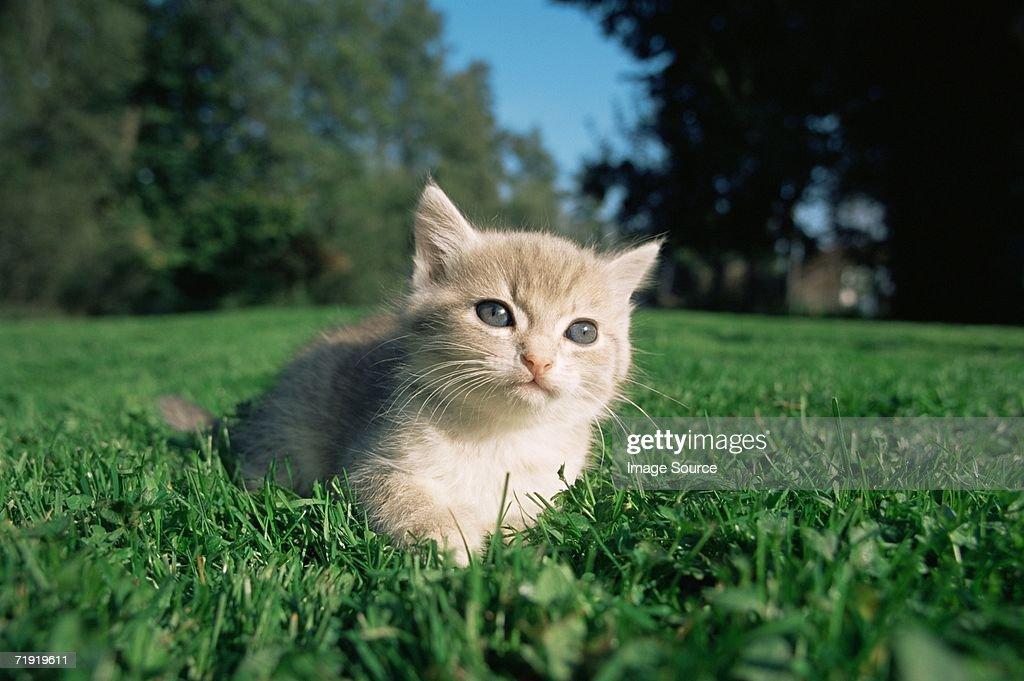 Curious looking kitten : Stock Photo