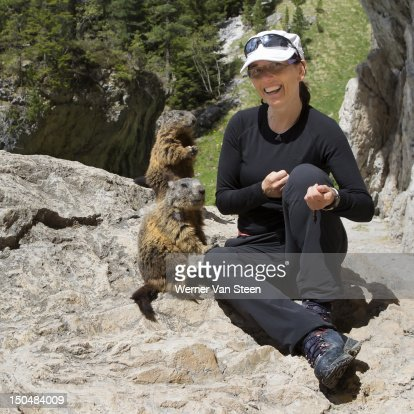 Curious marmots : Stock Photo