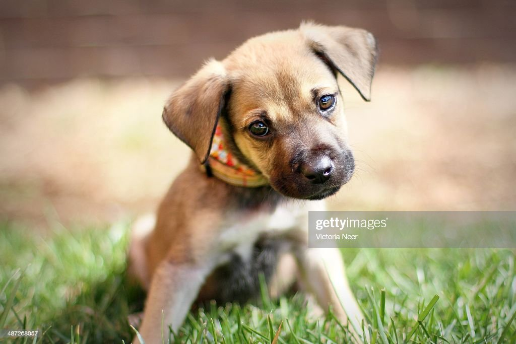 Curious puppy with tilted head