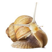 Studio shot of funny snail isolated on white.