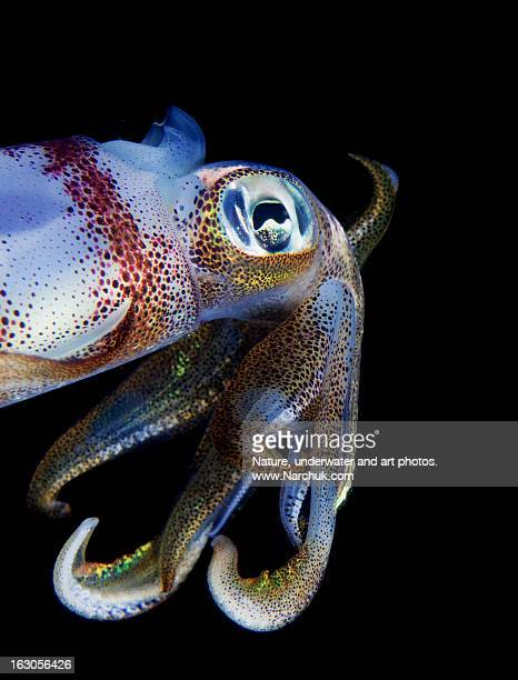 Curious squid