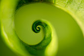 Macro photography of a spiral leaf