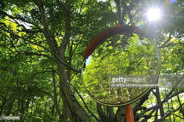 Curved Mirror in Woods