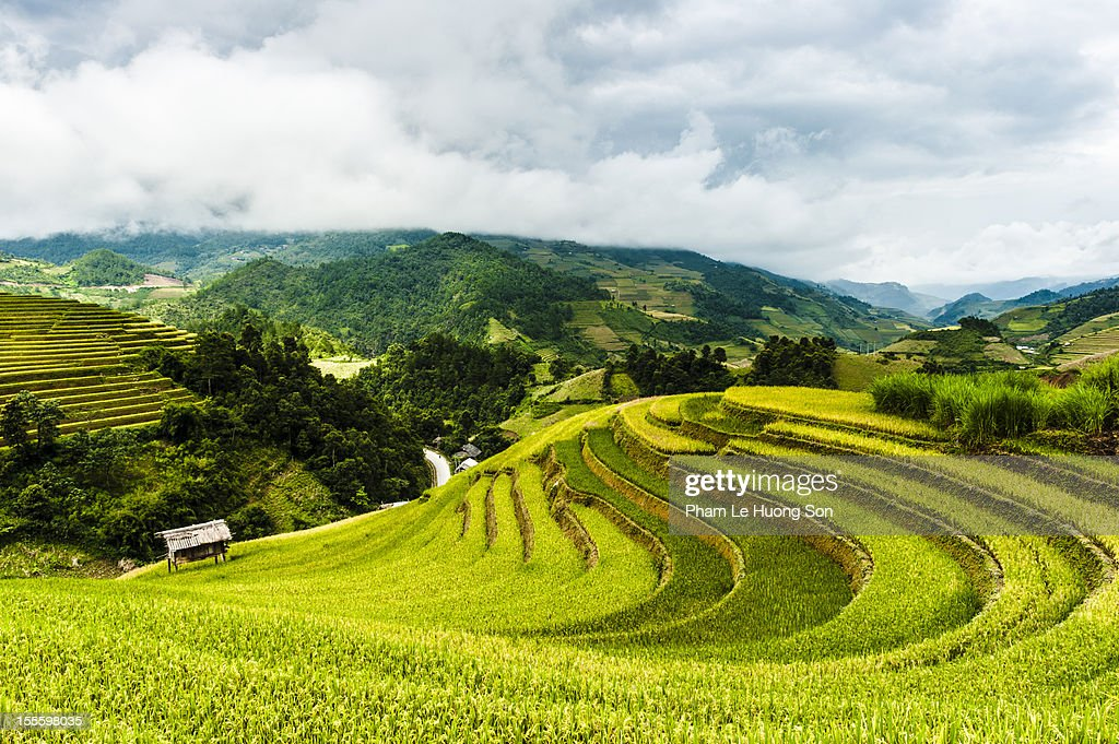 Curves of rice terraces on the hills : Stock Photo
