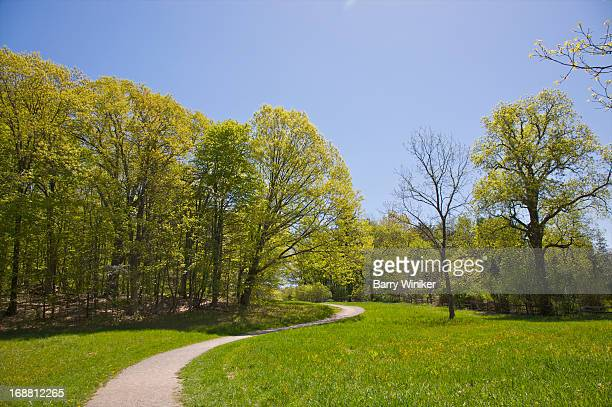 Curving path through green grass and trees