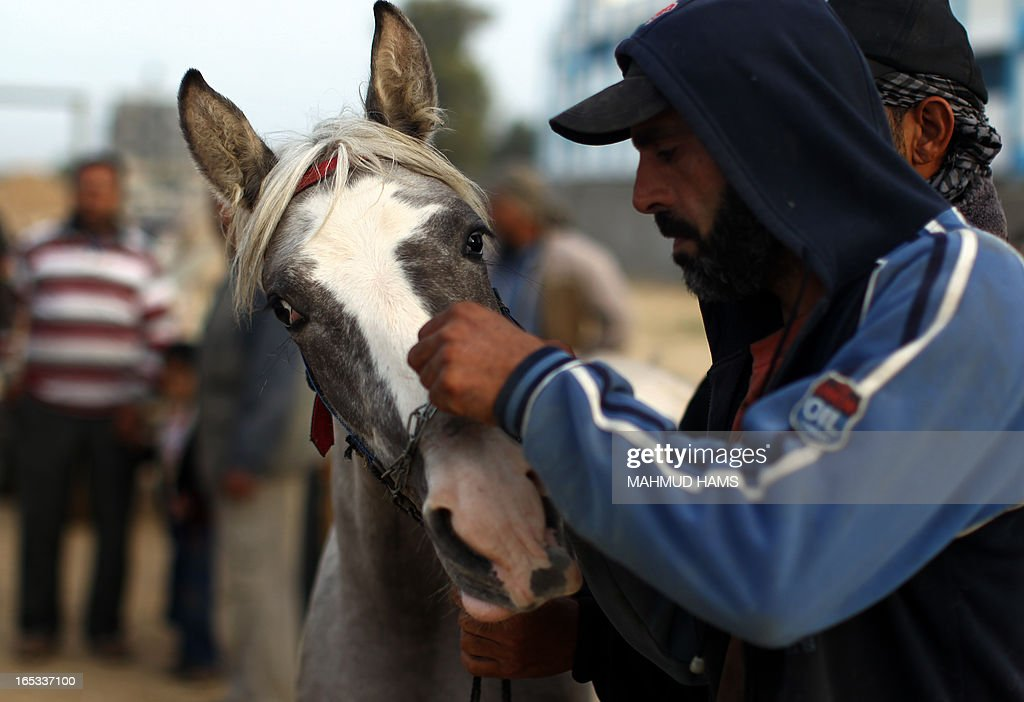 A customer checks a horse for sale at a market in the Deir al-Balah Palestinian refugee camp, situated along the Mediterranean coast in the central Gaza Strip, on April 2, 2013. The Aqra family, who originated from what is today southern Israel and moved to the Gaza Strip as refugees with the creation of the Jewish state in 1948, are members of the Quraan tribe. They have always been known as horse traders and breeders, renting out their services for the local transportation of goods and occasionally people, charging the equivalent of six or seven US dollars a day. AFP PHOTO/MAHMUD HAMS