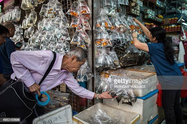 A customer inspects bags of fish as a vendor adds stock to her street stall display at the Mong Kok Goldfish Market in Hong Kong on November 1 2015...