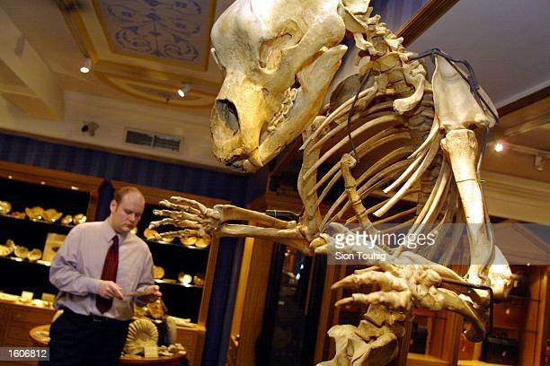 A customer looks at a fossil as he stands near a 200000 year old cave bear skeleton August 3 2001 at the Fortnum and Mason''s exclusive department...