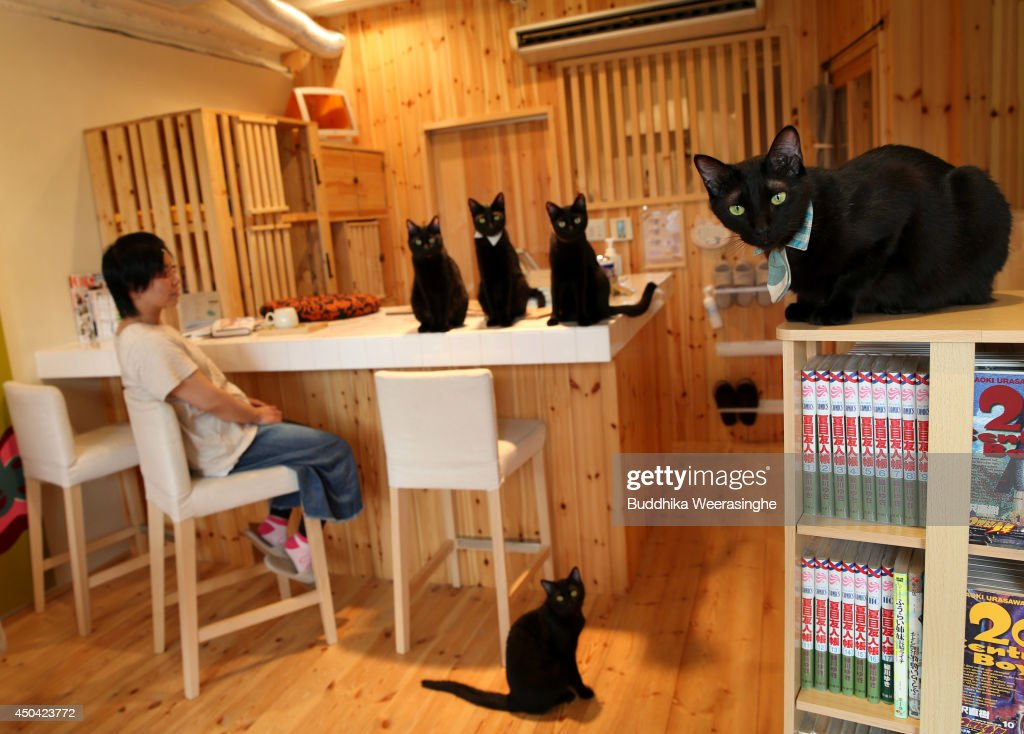 A customer sits amongst black cats at the Black Cat Cafe on June 11, 2014 in Himeji, Japan. The cafe originally opened as a regular 'cat cafe' where clients could pet different kinds of cats, but in September 2013 the cafe re-opened as black cat only cafe. The cafe owner helps find foster families for cats rescued cats from the Himeji local government pet euthanasia centre.