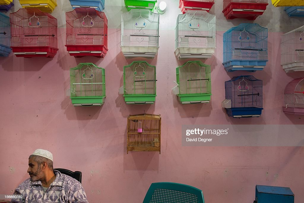 A customer sits in a small store specializing in caged pet birds, in Gaza City Gaza on November 22, 2012. Part of the ceasefire includes provisions for opening up the borders with Egypt and Israel within 24 hours.