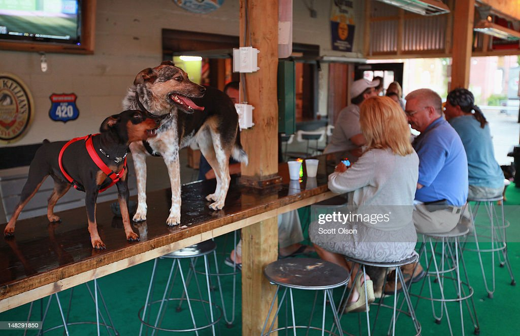 Customers and their dogs hang out at The Dog Bar on July 11, 2012 in Charlotte, North Carolina. The Dog Bar, located in Charlotte's NoDa neighborhood, is Charlotte's only dog friendly bar. To bring your dog the bar requires proof of rabies vaccination and requires all dogs over one year of age to be spayed or neutered. NoDa is Charlotte's historic arts district, known for its galleries, performance venues and funky restaurants. Businesses in Charlotte are anticipating a boost in sales when the city hosts the 2012 Democratic National Convention (DNC) September 3-6.