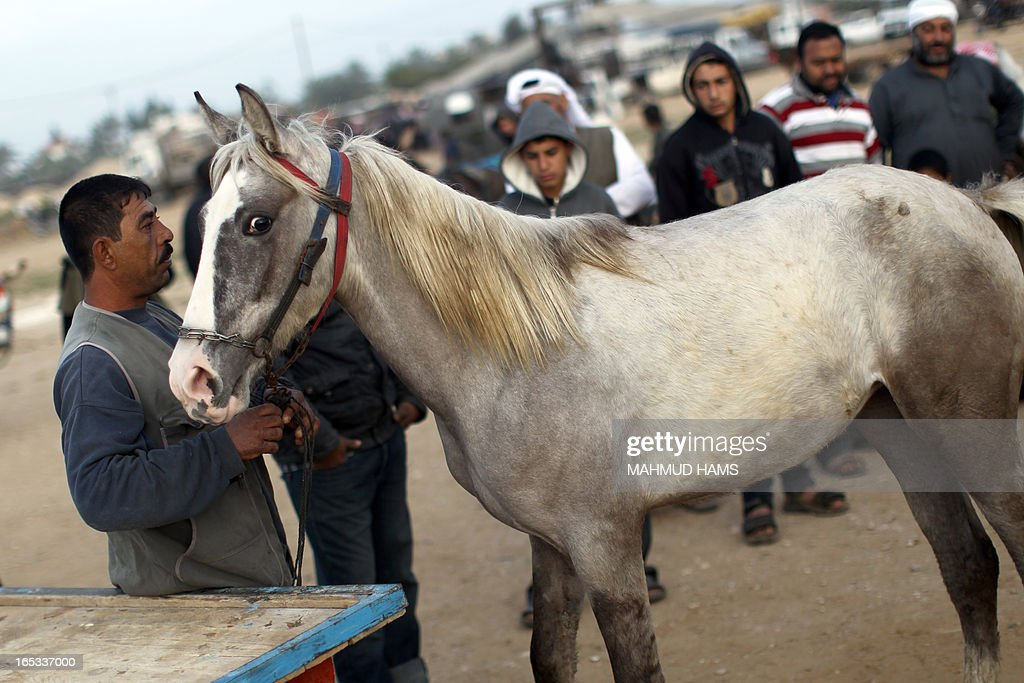 Customers look at a horse for sale at a market in the Deir al-Balah Palestinian refugee camp, situated along the Mediterranean coast in the central Gaza Strip, on April 2, 2013. The Aqra family, who originated from what is today southern Israel and moved to the Gaza Strip as refugees with the creation of the Jewish state in 1948, are members of the Quraan tribe. They have always been known as horse traders and breeders, renting out their services for the local transportation of goods and occasionally people, charging the equivalent of six or seven US dollars a day. AFP PHOTO/MAHMUD HAMS