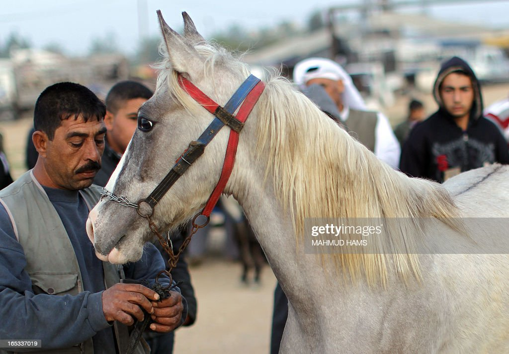 Customers look at a horse for sale at a market in the Deir al-Balah Palestinian refugee camp, situated along the Mediterranean coast in the central Gaza Strip, on April 2, 2013. The Aqra family, who originated from what is today southern Israel and moved to the Gaza Strip as refugees with the creation of the Jewish state in 1948, are members of the Quraan tribe. They have always been known as horse traders and breeders, renting out their services for the local transportation of goods and occasionally people, charging the equivalent of six or seven US dollars a day.
