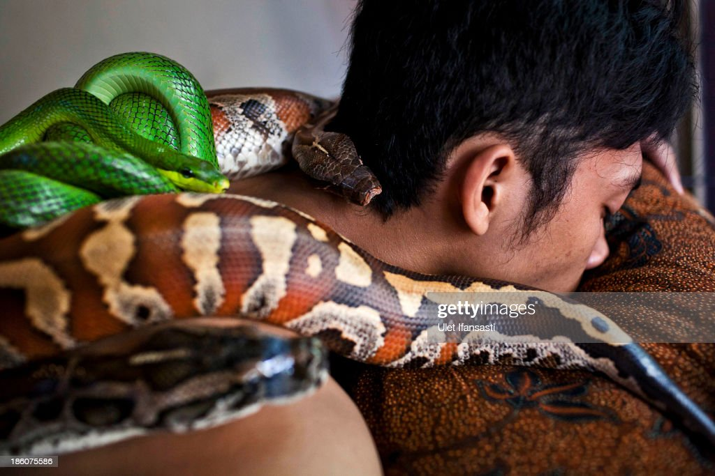 A customers undertakes a massage using pythons at Bali Heritage Reflexology and Spa on October 27, 2013 in Jakarta, Indonesia. The snake spa offers a unique massage treatment which involves having several pythons placed on the customers body. The movement of the snakes and the adrenaline triggered by fear is said to have a positive impact on the customers metabolism.