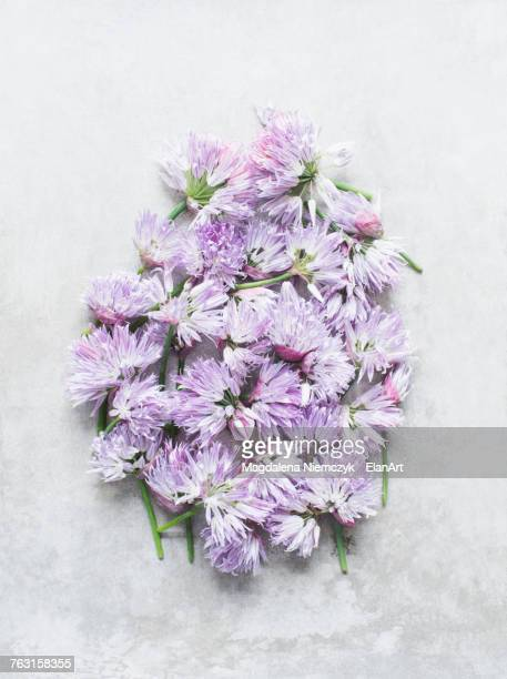 Cut chives flowers in cluster