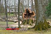 cut down hollow tree at a the spa park of Bath Tatzmannsdorf