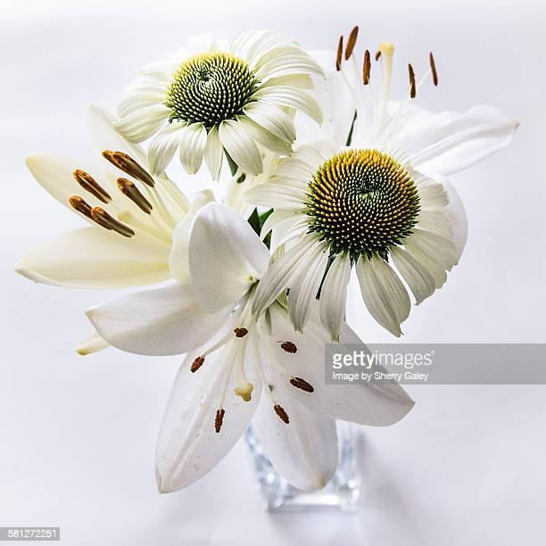 Cut garden flowers in vase, all-white