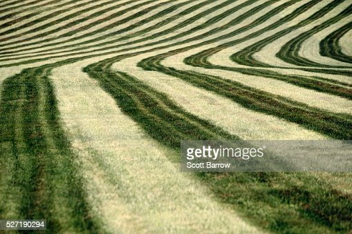 Cut hay field : Stock Photo