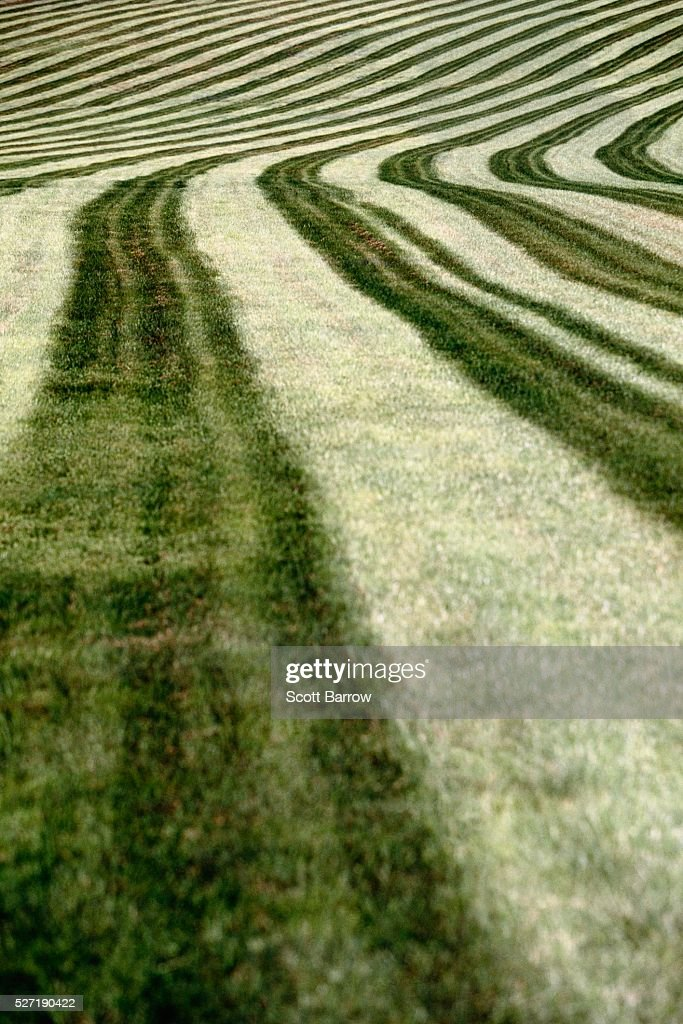 Cut hay field : Foto de stock