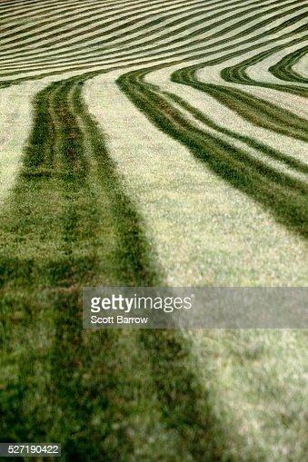 Cut hay field : Stockfoto