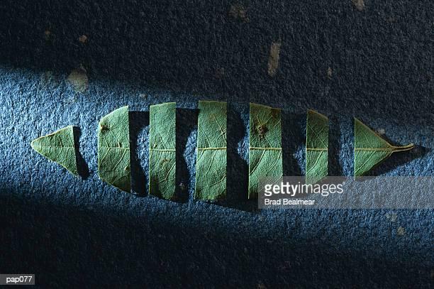 Cut Leaf on Blue-Gray Background