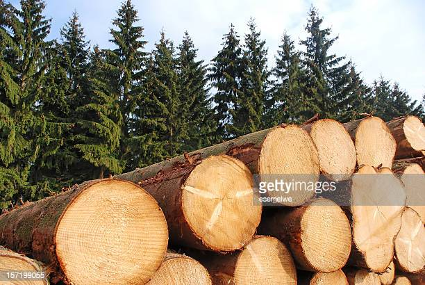 Cut logs stacked in front of pine trees