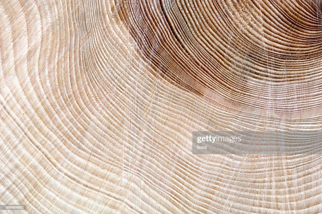 Cut of tree : Stock Photo